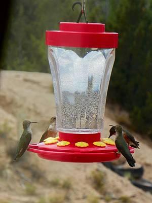 Photograph - Four Hummingbirds Feeding by Joseph Frank Baraba