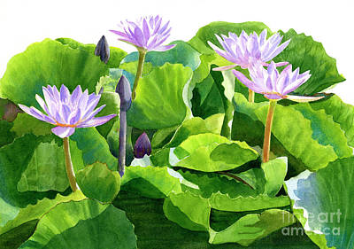 Four Lavender Water Lilies Original by Sharon Freeman