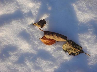 Four Leaves Art Print