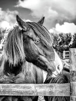 Photograph - Four Legged Friend by Nick Bywater