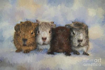 Cavy Digital Art - Four Little Guinea Pigs by Jutta Maria Pusl