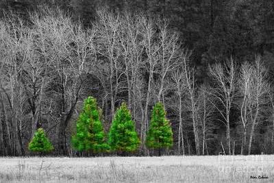 Photograph - Four Little Yosemite Xmas Trees by Blake Richards