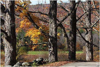 Photograph - Four Maples On George Road by Wayne King