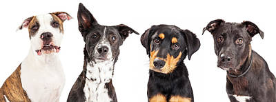 Portraits Royalty-Free and Rights-Managed Images - Four Mixed Breed Dogs Closeup by Susan Schmitz
