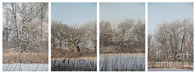 Photograph - Four Oaks by David Bearden