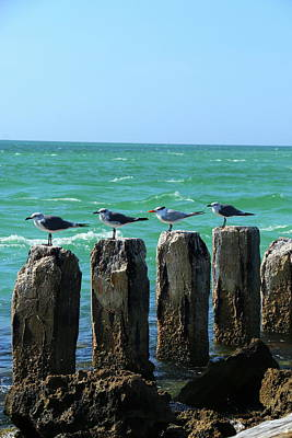 Photograph - Four On A Jetty by Christiane Schulze Art And Photography