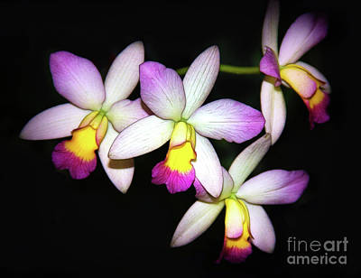 Photograph - Four Orchids by Judi Bagwell
