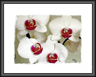 With Red Photograph - Four Orchids by Marsha Heiken