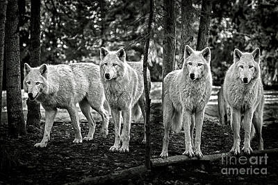 Photograph - Four Pack by Sonya Lang