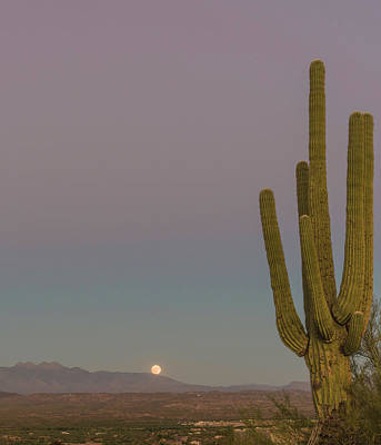 Full Moon Photograph - Four Peaks Moonrise by Mike Herdering