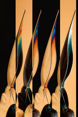 Pen Photograph - Four Pen Nibs by Carol Leigh