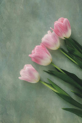 Photograph - Four Pink Tulips  by Kim Hojnacki
