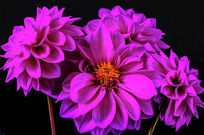 Photograph - Four Purple Dahlias by Garry Gay