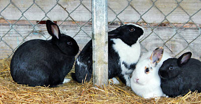 Photograph - Four Rabbits by Cynthia Guinn
