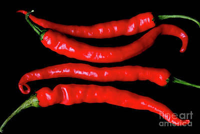 Photograph - Four Red Chilies by Alan Harman
