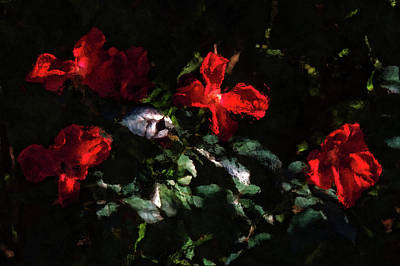Photograph - Four Red Roses by HH Photography of Florida