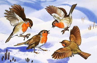 Wintry Drawing - Four Robins In The Snow by English School