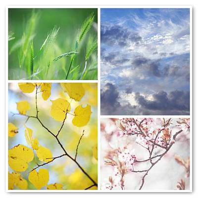 Photograph - Four Seasons Collage 1 by Jenny Rainbow