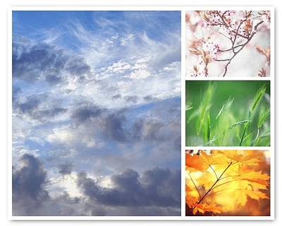 Photograph - Four Seasons Collage 2 by Jenny Rainbow