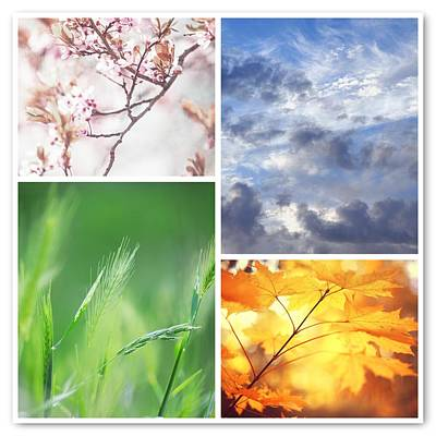 Photograph - Four Seasons Collage by Jenny Rainbow