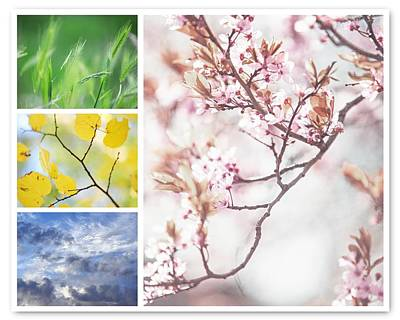 Photograph - Four Seasons Collage. Spring Sakura Bloom by Jenny Rainbow