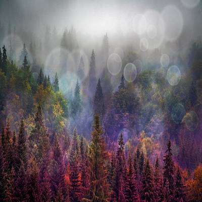 Photograph - Four Seasons Forest by Marianna Mills