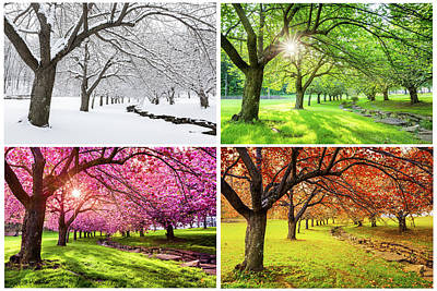 Photograph - Four Seasons by Mihai Andritoiu