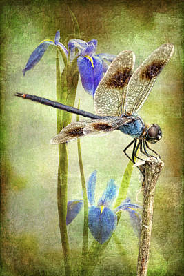 Dragonflies Photograph - Four Spotted Pennant And Louisiana Irises by Bonnie Barry