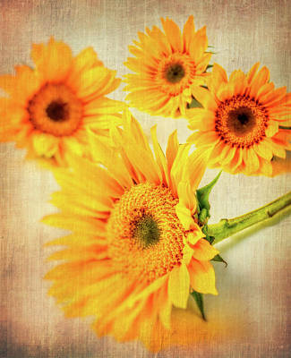 Photograph - Four Textured Sunflowers by Garry Gay