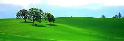 Photograph - Four Trees On The Hill by Jerry Sodorff