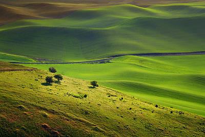 Contour Farming Photograph - Four Trees - Palouse - Washington by Nikolyn McDonald