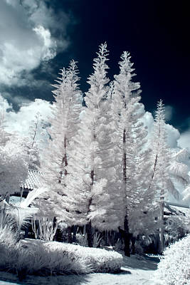 Surrealism Royalty-Free and Rights-Managed Images - Four Tropical Pines Infrared by Adam Romanowicz