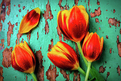 Peeling Painted Wood Wall Art - Photograph - Four Tulips With Dew by Garry Gay