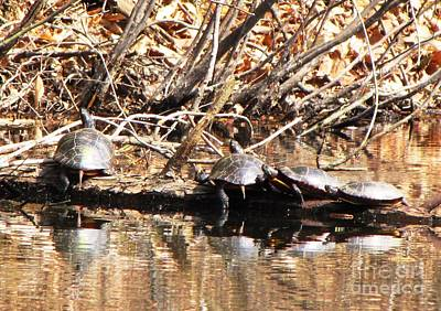 Photograph - Four Turtles by Melissa Stoudt