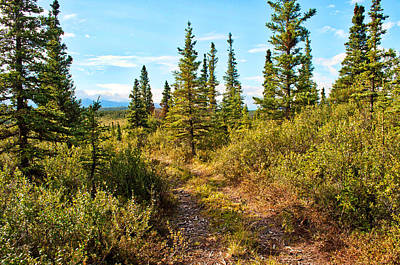 Photograph - Four Wheeler Trail - Richardson Highway by Cathy Mahnke