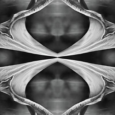 Photograph - Four Winds Bw by Laura Fasulo