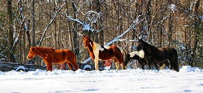 Photograph - Four Winter Horses by Kathryn Meyer