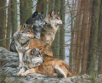 Gray Wolf Painting - Four Wolves by David Stribbling