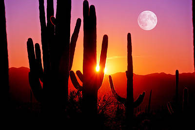 Photograph - Fourth Sunset At Saguaro by John Hoffman