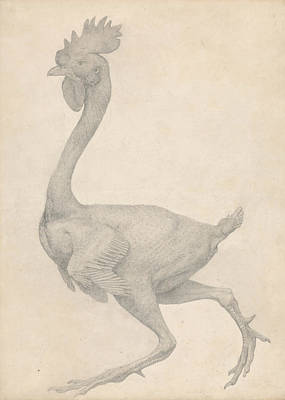 Fowl, Lateral View With Most Feathers Removed  Art Print by George Stubbs