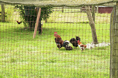 Photograph - Fowl Residents Of Hovander by Tom Cochran