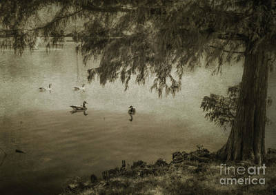 Photograph - Fowl Weather by John Anderson