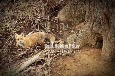 Photograph - Fox 0254 by Captain Debbie Ritter
