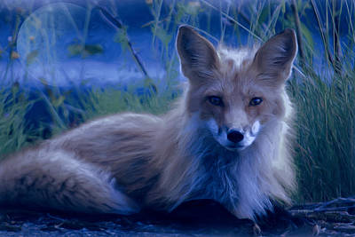 Photograph - Fox At Night - Painting by Ericamaxine Price