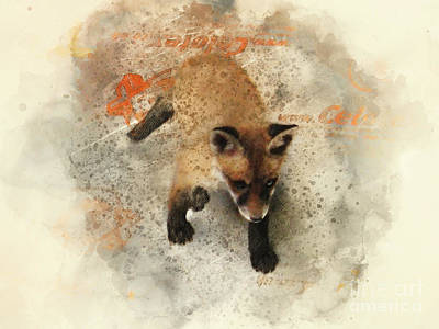 Photograph - Fox Cub by Jack Torcello