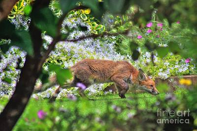 Photograph - Fox Cub by Vicki Spindler