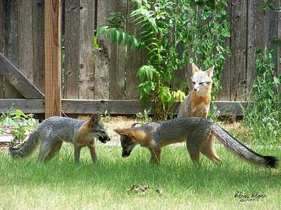 Photograph - Fox Family by Deleas Kilgore