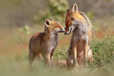 Bonding Photograph - Fox Felicity by Roeselien Raimond