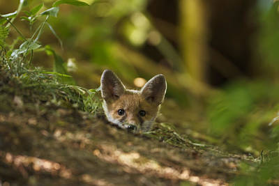 Photograph - Fox Hole by Calum Dickson