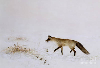 Foxes Painting - Fox In Snow by Jane Neville